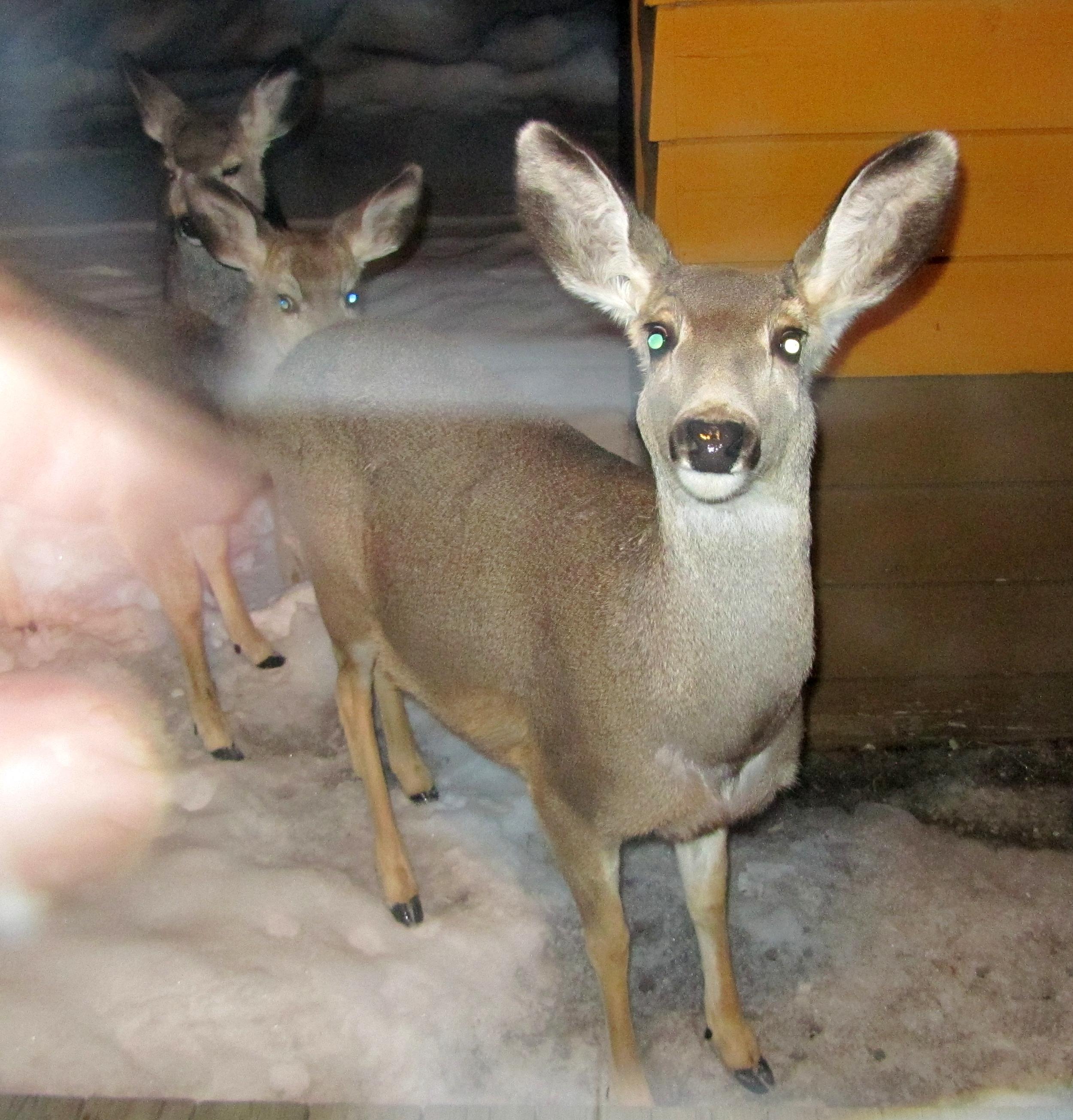 deer hunter 2005 download softonic